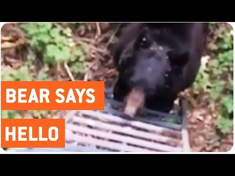 Close Encounter With A Bear | Bear-ly Survived