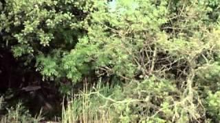 Les deux anglaises et le continent (1971) - Travelling shot (Une petite île)