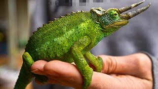 Top 20 animais exóticos que você não sabia que eles podem ser possuídos como animais de estimação
