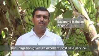 Jain Tissue Culture - Banana and other crops