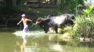 Sim Brasil Notícias - Animal de estimação que pesa 900 kg (INSTAGRAM @glauciamazini)