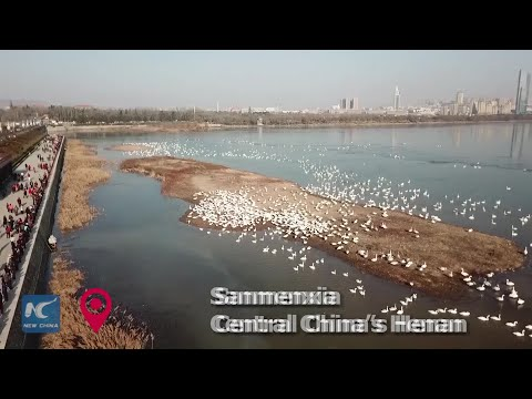 """Swan City"" in C China"