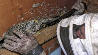 yellow-jackets-inside-house-wasp-nest-removal