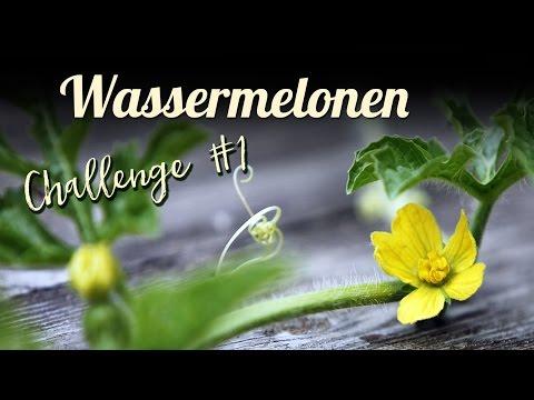 frühling- -wassermelonen-anbauen,-wassermelonen-challenge,-teil-1/4- -garten