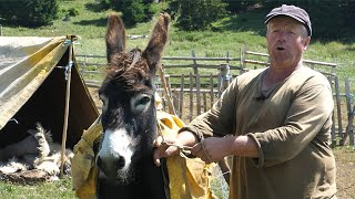 Pet ovaca Brico prodao za 7.500 KM