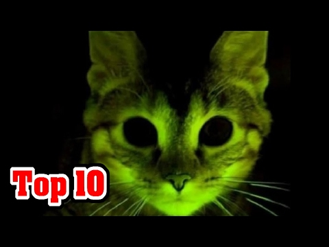10 Animals MODIFIED By SCIENCE