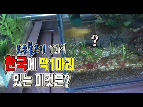 가치를 따질수없는 한국에 딱1마리 있는 물고