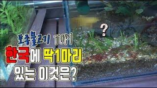 """가치를 따질수없는 """"한국에 딱1마리"""" 있는 물고기..? [정브르]"""