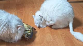entrust a cat with fish|cat daily|cat toy|cat fishing(190610)고양이 장난감,고양이 쥐 장난감