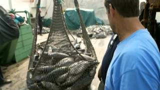 Миссия: Спасение океанов (3 серия)