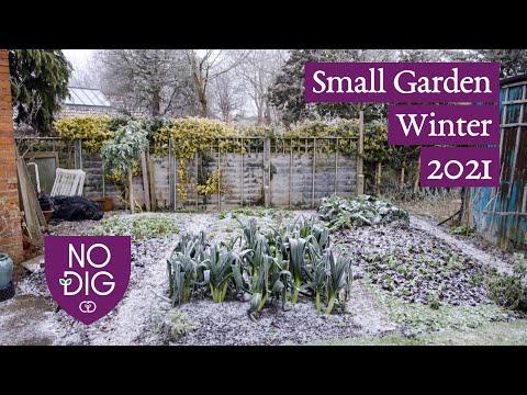 Small Garden Winter 2021