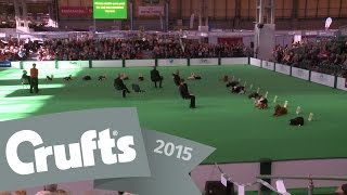 Dog Obedience Championships - Stays | Crufts 2015