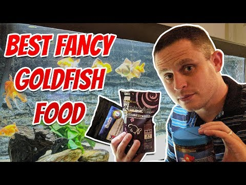 Best Fancy Goldfish Food - What I Feed My Fish