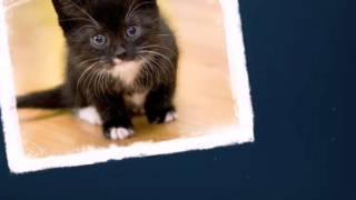 Красота черно - белых котят