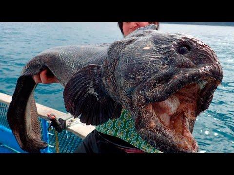 Самые ядовитые животные фото, Самые ядовитые животные в