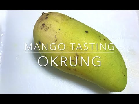 Okrung Mango Tasting Florida Grown Mango Youtube
