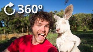 360º Talking Kangaroos - Australia 4K thumbnail