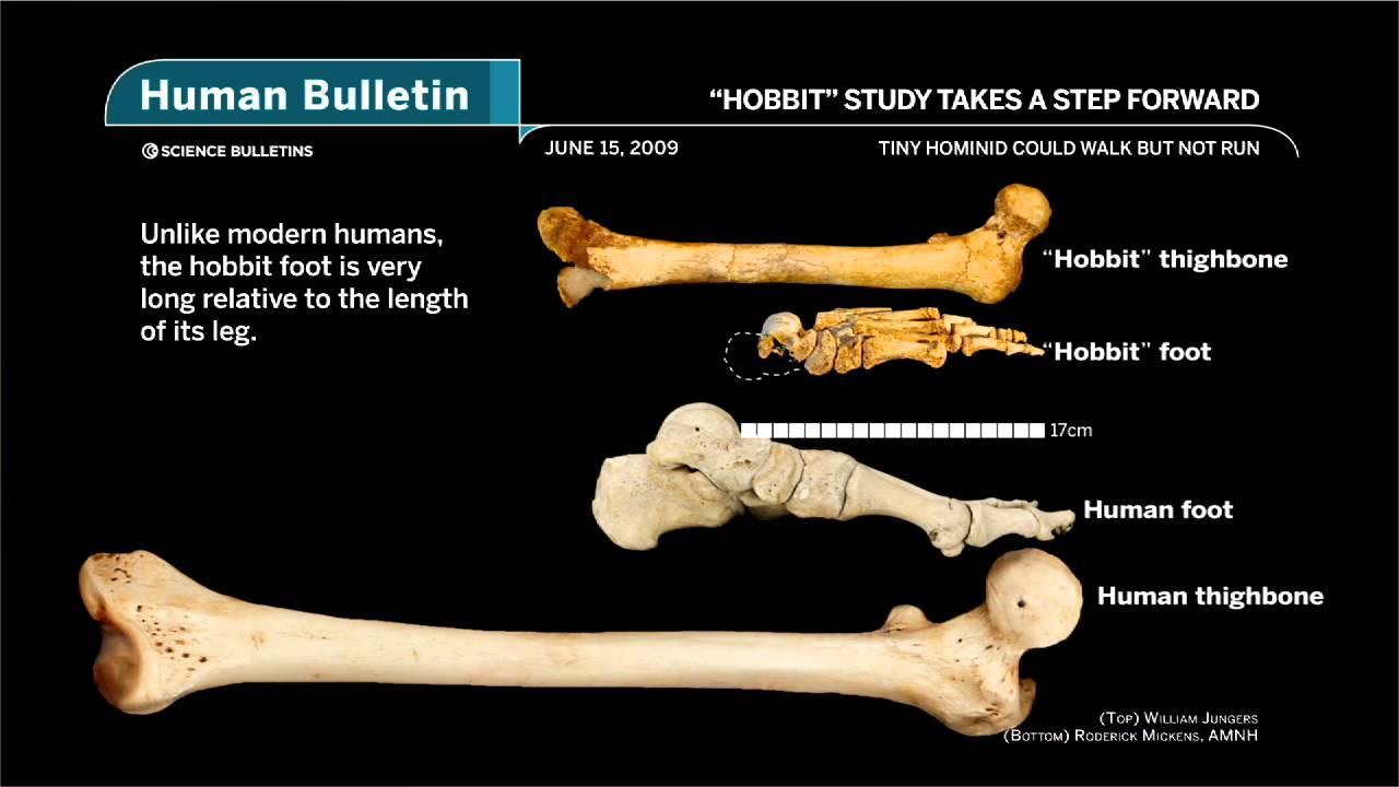 American Museum Of Natural History Science Bulletins