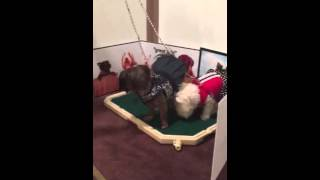 Time For Pet Potty With Cece & Bebe - Nyc Doggies Use The Piddle Place