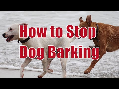 How to Stop Dog from Barking |  Dog Training | Doggy Dan