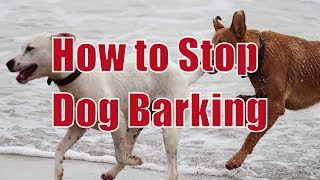 How to Stop a Dog Barking - Doggy Dan Tricks and Tips