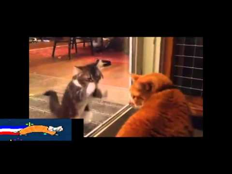 Cat Vine Compilation