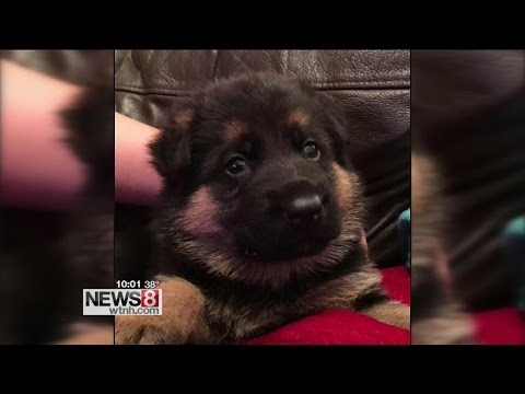 Woman scammed trying to buy dog on Craigslist - YouTube