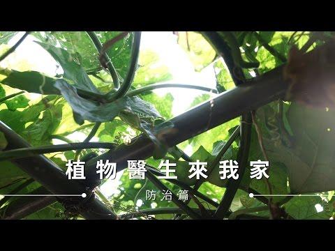 【種菜防蟲】居家種菜安心吃,動手做安全有機的病蟲害防治液!