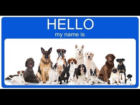 125 Unique Male Dogs Names
