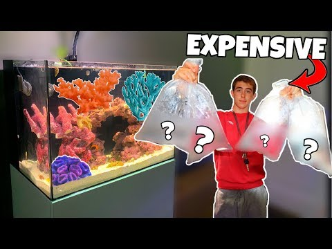 BUYING NEW SALTWATER FISH! (what's Inside?)