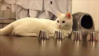 Smart Cat Performs AMAZING Trick