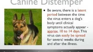 Distemper - Canine Distemper Virus - What Is Distemper?
