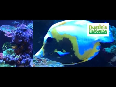 BEST Saltwater Coral REEF Aquarium Store I've seen
