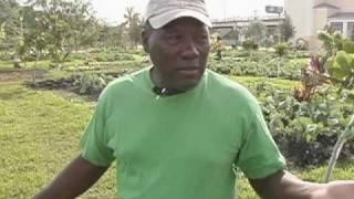 Inner-City Garden Plants New Hope in Miami Neighborhood