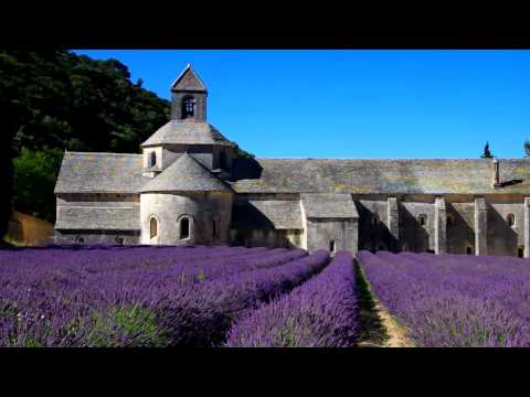 Travel insurance for medical conditions (lavender field)