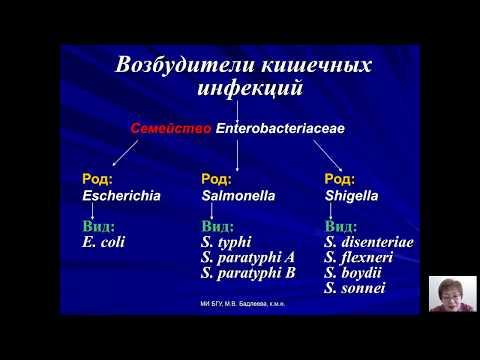 Возбудители бактериальных и вирусных инфекций (Бадлеева М.В.) - 1 лекция