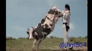 vaca vs hombre