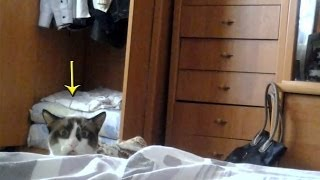 Cat Peeking Over Bed - Funny Russian Dramatic Stalking Cat [HILARIOUS]