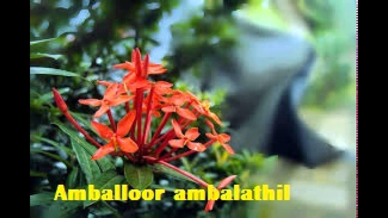 amballoor ambalathil aarattu mp3