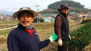 แรงงานคนไทยในเกาหลี