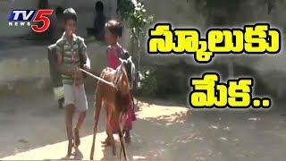స్కూలుకి వెళ్తున్న మేక..! | Goat To School | Telangana | TV5 News
