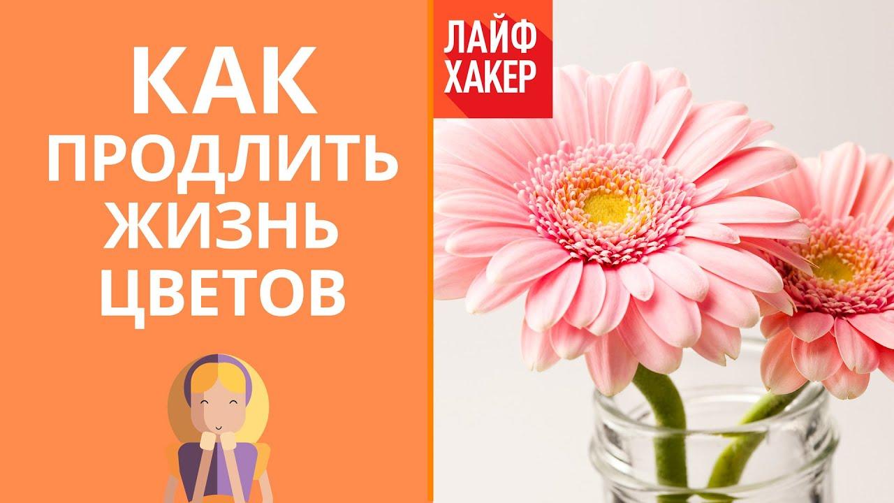 Как продлить жизнь свежесрезанных цветов | Лайфхакер