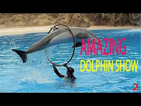 Amazing Intelligence Dolphin Show | Amazing Dolphin Behavior Videos Part2