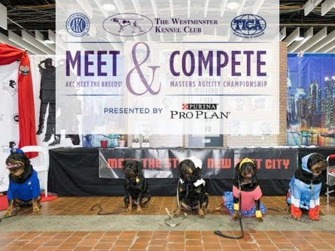 AKCtv Live Presents Meet the Breeds 2019