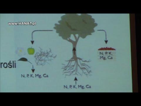 Nawożenie drzew owocowych  - dr hab Jan Błaszczyk