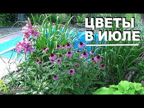 Какие цветы цветут в июле  в жару на юге  Неприхотливые цветы