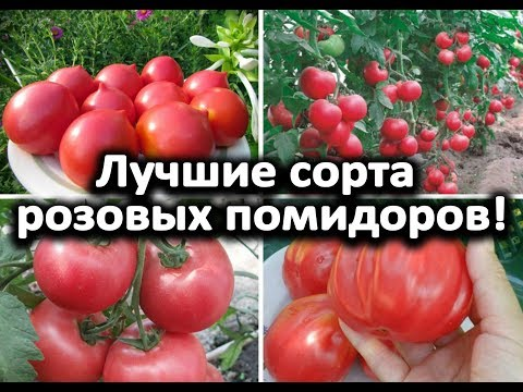 Лучшие сорта розовых помидоров!