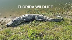 TOP 10 MOST DANGEROUS ANIMALS IN FLORIDA