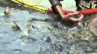 Fish Farm Chatak Bangladesh