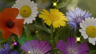 Музыка цветов для Вас!